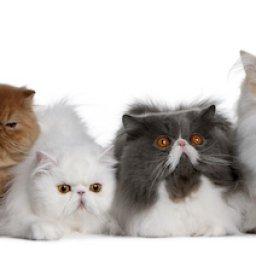 Paw Partner Cats