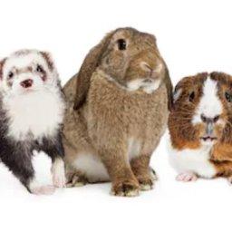 Paw Partner Pets