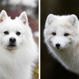 9-pets-that-turned-out-to-be-wild-animals